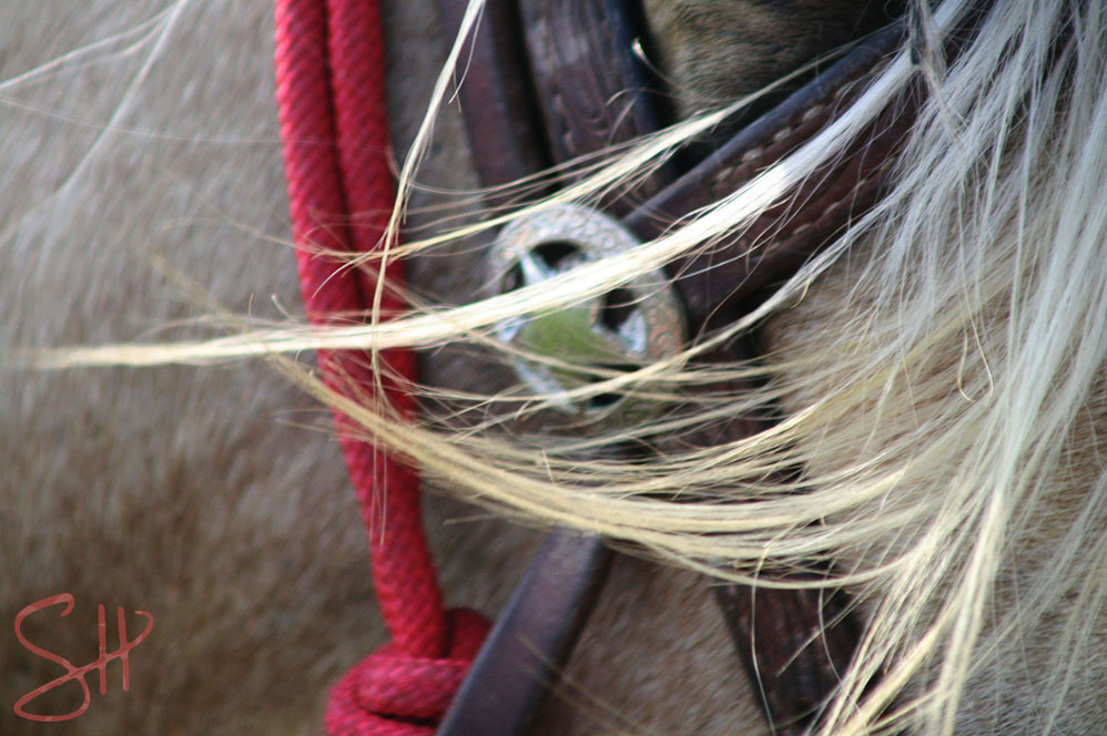 Horse bridle and wind-blown hair