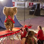 Bears performing in the circus